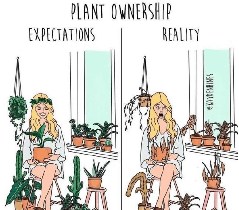 Plant Ownership cartoon Kay Denhines with two panels of a woman with alive and dying houseplants