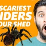 The Scariest UK Spiders You'll See In A Shed