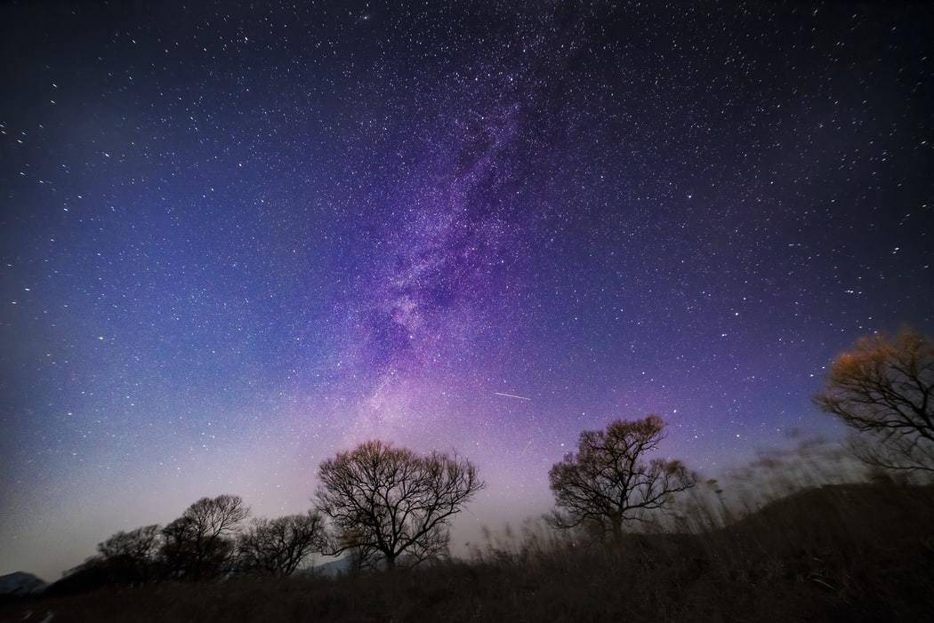 Nights sky with trees