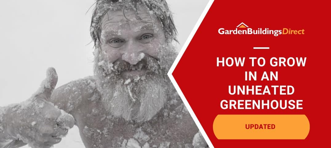 Unheated Greenhouse Growing with frozen man giving thumbs up