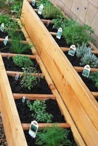 herbs in a garden planted in soil and separated by strips of wood so they each have their own square