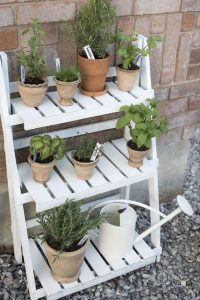 plant pots of various sizes stacked vertically on wide shelves/shelving that is painted white