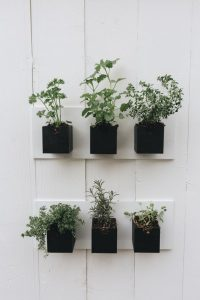 plants in black plant pots stuck to a white wall in rows of three