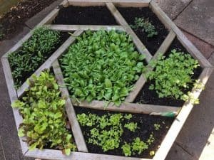 a hexagonal plant bed with plants of varying shades of green in constructed using old paving slabs in an irregular pattern
