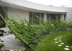 a net attached to a roof and the ground diagonally slanted with vines growing on it spanning the perimeter of a grass lawn
