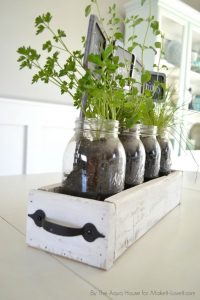 plants in old clear glass bottles in a small thin white drawer with a black handle for easy transportation
