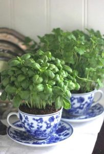 plants in blue greek style tea cups/saucers