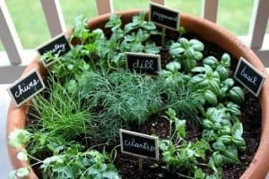 different herbs in one big plant pot on a balcony/decking