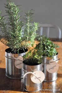 tin cans filled with various herbs and green plants and soil