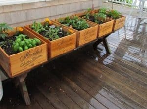 old wooden boxes on stilts arranged next to each other with names on the front to distinguish filled with plants