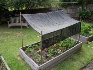 a plant/flower bed covered by a tarpaulin suspended above the plants to cover them from the sun and create shade with wooden poles at each corner