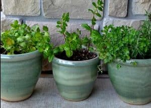 ceramic green pots with plants in them on a patio