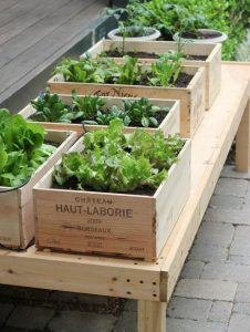 old wine boxes with plants in them used for growing herbs
