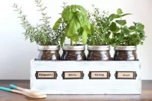 old jam jars filled with soil and being used for growing herbs such as rosemary, basil and thyme