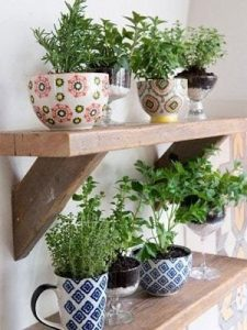 plants and herbs on shelves in a kitchen inside old teacups that are pink and blue with flowery and interesting patterns and designs on them