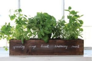 close up of a small rectangular horizontal planter with names of herbs written on the front in a fancy font and plants and herbs being grown in it