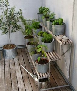 three old steps or stairs being used as shelves for potted plants and herbs in pots on a patio in steel or metal pots with some stones or pebbles and a watering can underneath