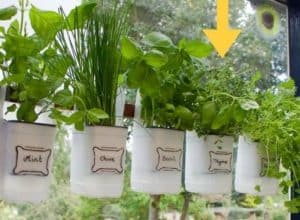 a close up of old milk bottles that have been cut in half horizontally and with plants and herbs stuck in the bottom half with some labels written on in permanent marker or sharpie pen with some nice design and handwriting