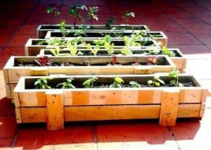 long rectangular wooden planters, five in total, lined with soil and plants and herbs to grow