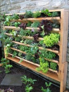 an old bookshelf filled with plants in plant pots