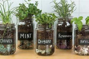 plants and herbs in clear jars with labels on written in chalk