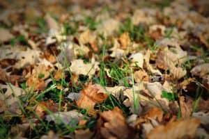 Dead brown leaves in autumn garden