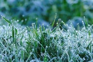 Garden grass covered in frosty autumn garden