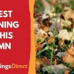 The Best Gardening Tips This Autumn