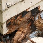 How To Prevent Your Shed From Rotting – 4 Effective Ways
