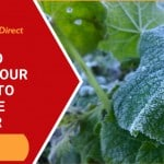 How To Prepare Your Plants To Survive Winter