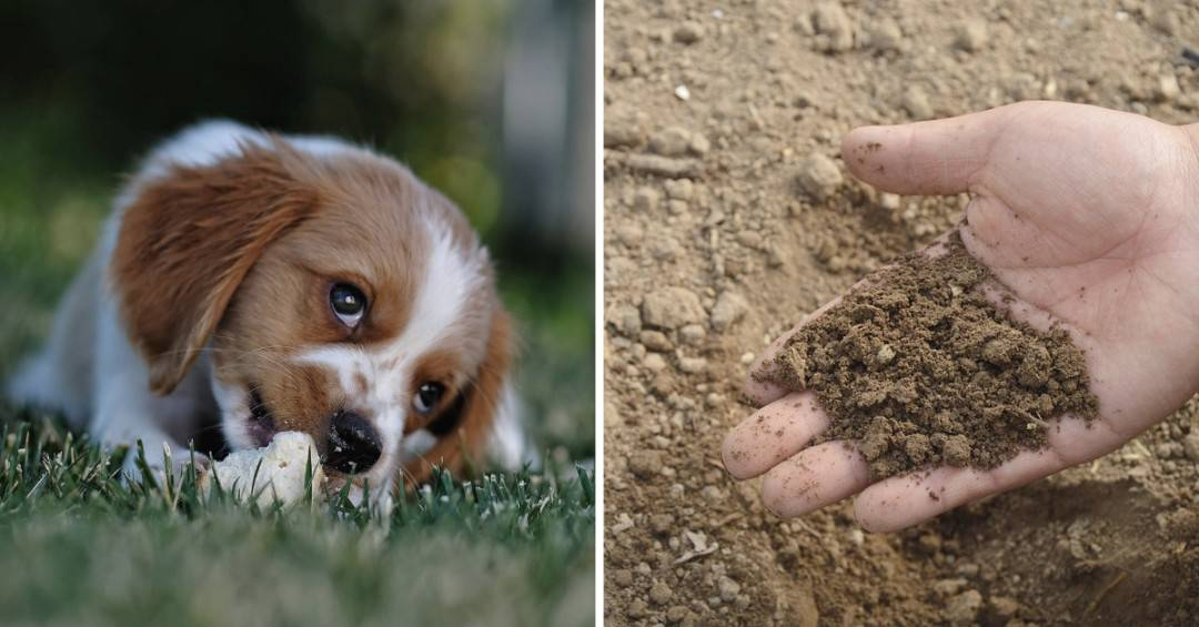 Doggy Dangers: 13 Potential Garden Hazards for Dogs