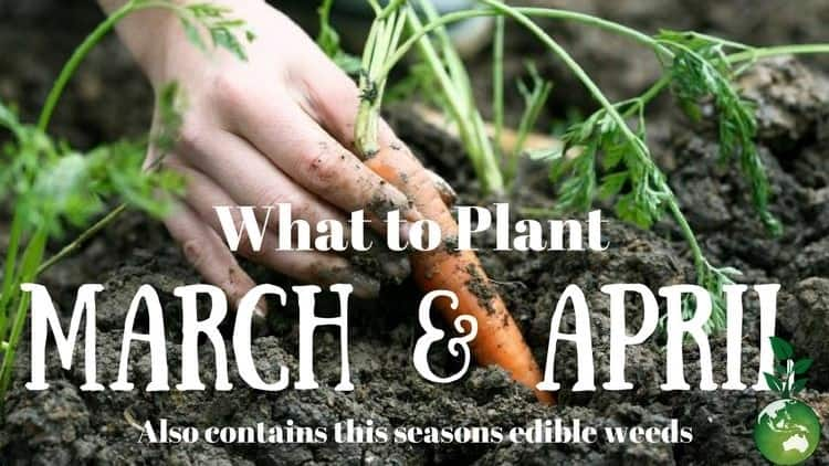 Gaia's Organic Gardens 'What to Plant' Blog banner