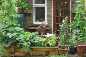 Mark Ridsdill Smith of Vertical Veg surrounded by plants on a patio