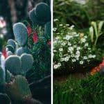 7 Simple Garden Ideas for Beginners – Gardener's Cheat Sheet