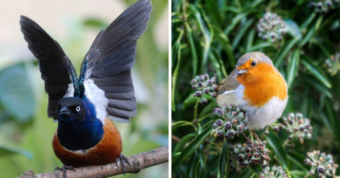 common-wild-birds-uk