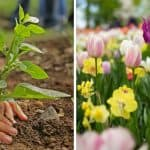 A Guide to Companion Planting for Beginners