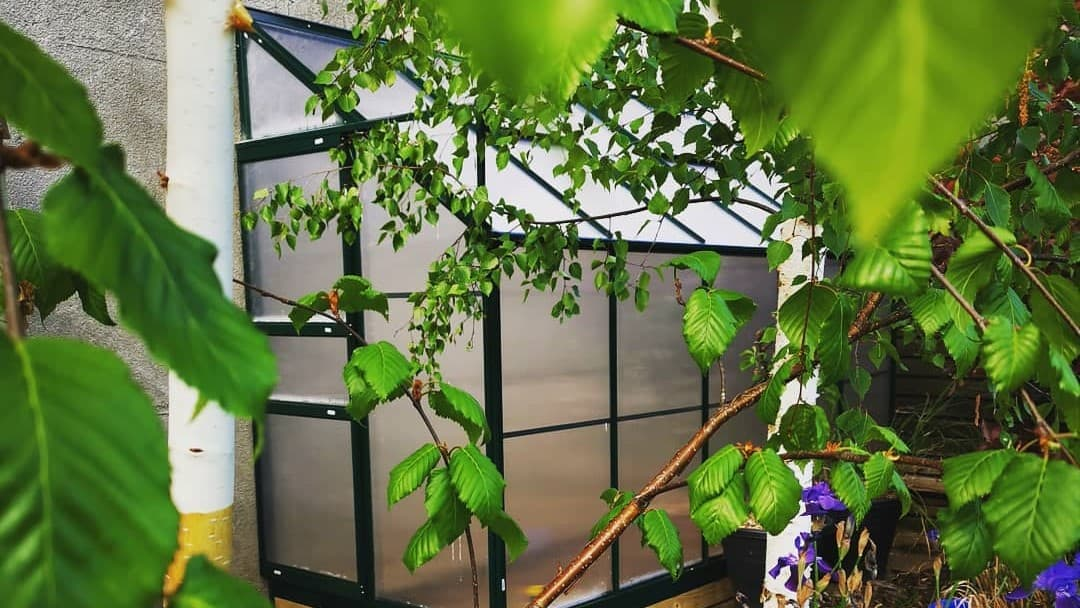 lean-to glass or polycarbonate greenhouse against a wall past foliage