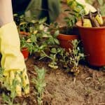 Timeless Gardening Tips You Can Apply in Your Yard