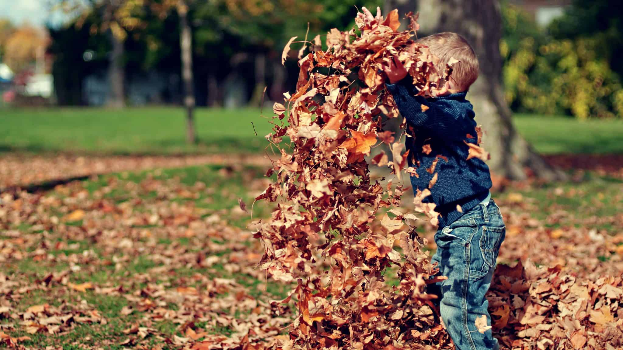 Child throwing pile of dry leaves up