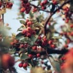 Plant Profile: Everything You Need to Know About Rosehip