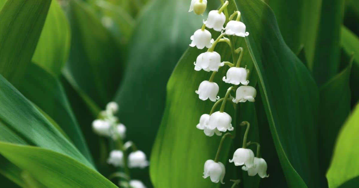 poisonous-plants-lurking-garden-1