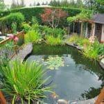8 Practical Tips in Building a DIY Pond in Your Garden