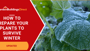 How to make plants survive winter with frozen leaves