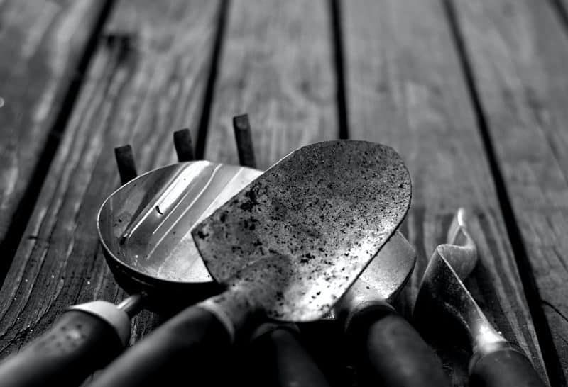 black and white picture of garden small gardening tools and trowels on wooden planks or deckin