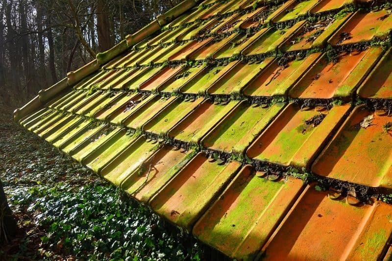 discoloured shed roof tiles with moss and lichen growing in a forest